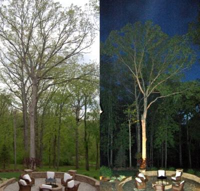 St.Louis tree lighting