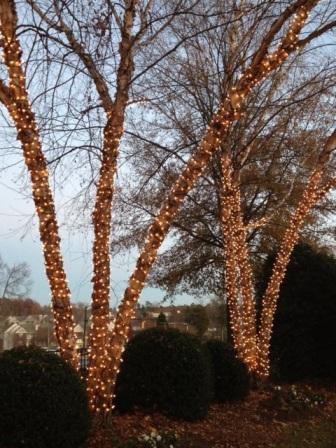 St. Louis LED tree wrap lighting