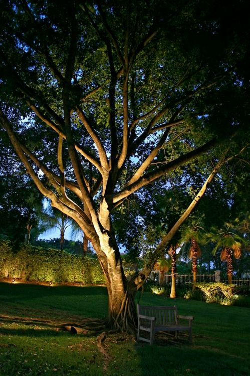 Outdoor Lighting Perspectives tree lighting