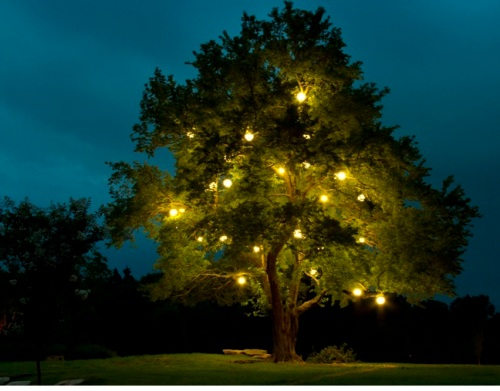 Permanent festival lighting added to this majestic tree makes the perfect spot to mingle under in the evening.