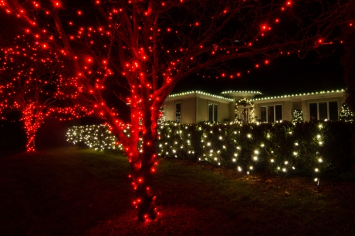 The use of different color C9 lights for different landscape elements is very effective from an aesthetic perspective.